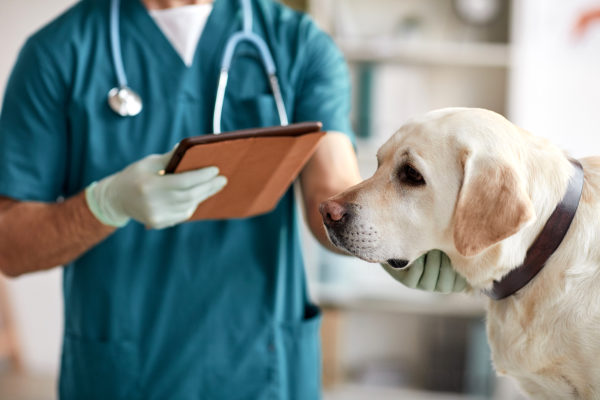 What Petsecure Pet Health Insurance Covers: A Quick Guide